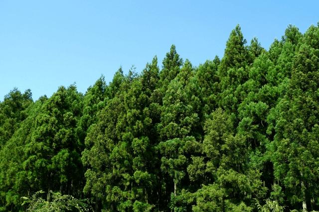 yokosuka_mountain