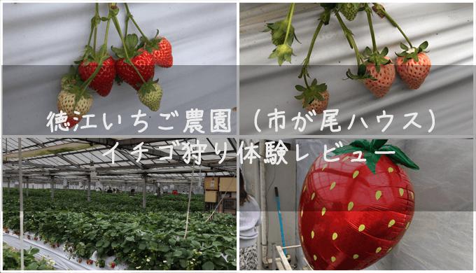 徳江いちご農園でイチゴ狩りをした体験談